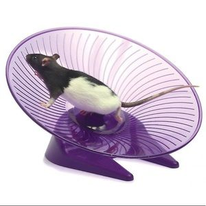 """7"""" Small Pet Flying Saucer Silent Wheel"""